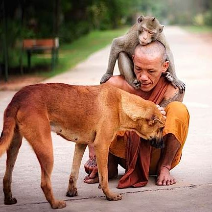 A Buddhist monk shares a tender moment with a dog and monkey.
