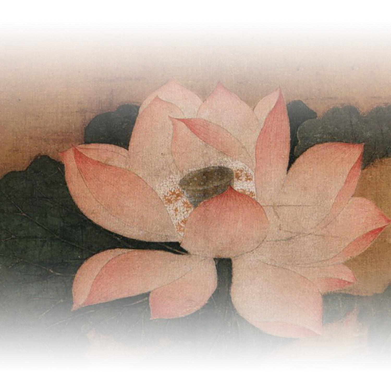 lotus grad