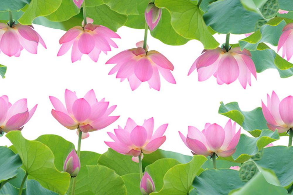 lotus tiled 43298808 1000