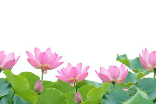 lotus tiled 43298808 500
